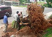 Pohontumbang